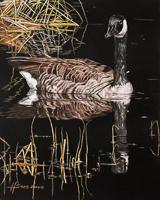 Canada Goose Study