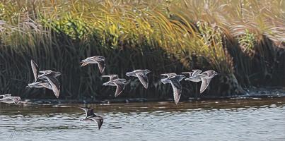 Light, Air & Water -   </br>Oak Hammock Marsh