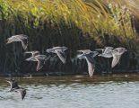 Light Air and Water<br> - Oak Hammock Marsh